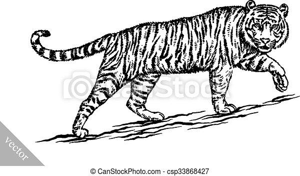 tiger, rajzol, bevés, ábra, tinta - csp33868427