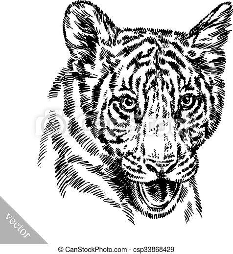 tiger, rajzol, bevés, ábra, tinta - csp33868429