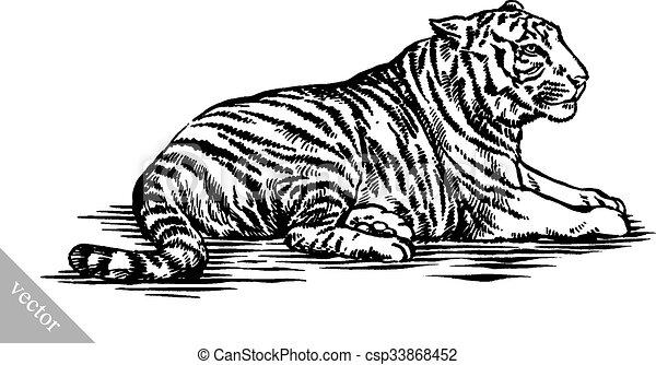 tiger, rajzol, bevés, ábra, tinta - csp33868452