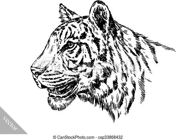 tiger, rajzol, bevés, ábra, tinta - csp33868432