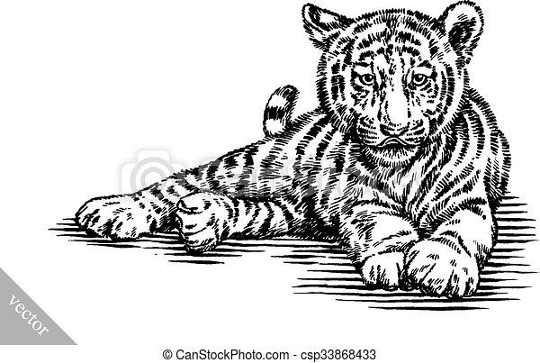 tiger, rajzol, bevés, ábra, tinta - csp33868433