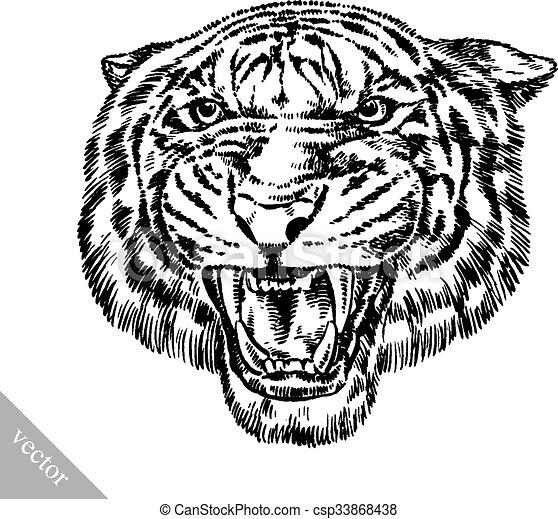 tiger, rajzol, bevés, ábra, tinta - csp33868438