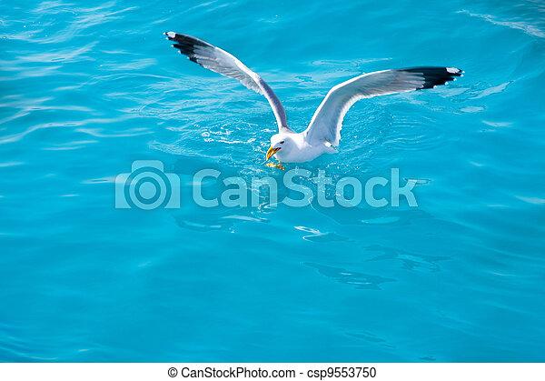 víz, sirály, madár, tenger, óceán - csp9553750