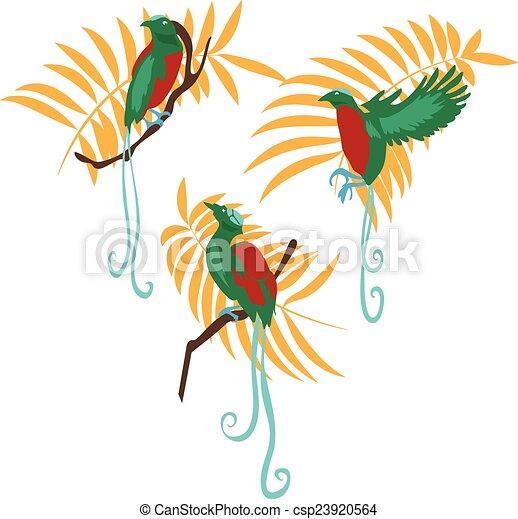 vektor, állhatatos, madár, ábra, paradicsom - csp23920564