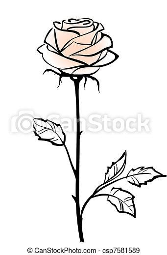 vektor, háttér, rózsa, rózsaszínű, gyönyörű, elszigetelt, egyedülálló, white virág, ábra - csp7581589