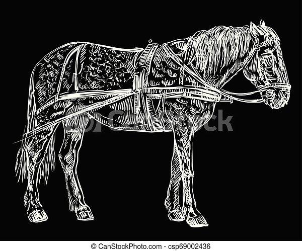 vektor, ló, hám, fekete - csp69002436