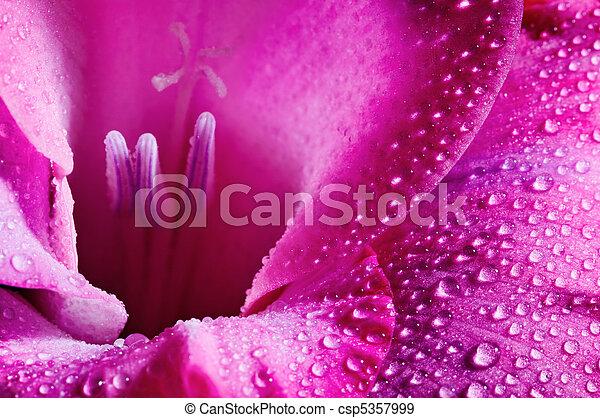 virág, rózsaszínű - csp5357999
