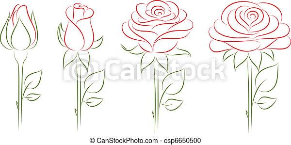 virágzó, roses. - csp6650500