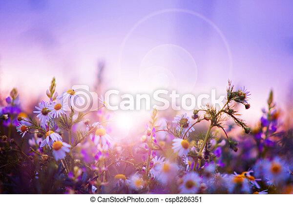 visszaugrik virág, mező - csp8286351
