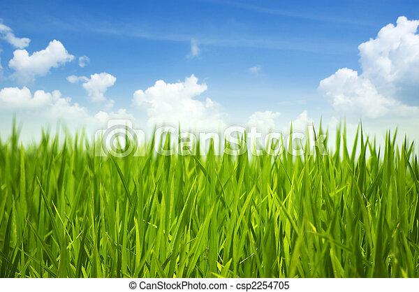 zöld fű, ég - csp2254705